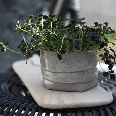 the popular stoneware for your herbs