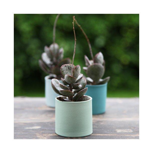 Esther Elisabeth Pedersen - Keramik kaktuskrukke, lys forår